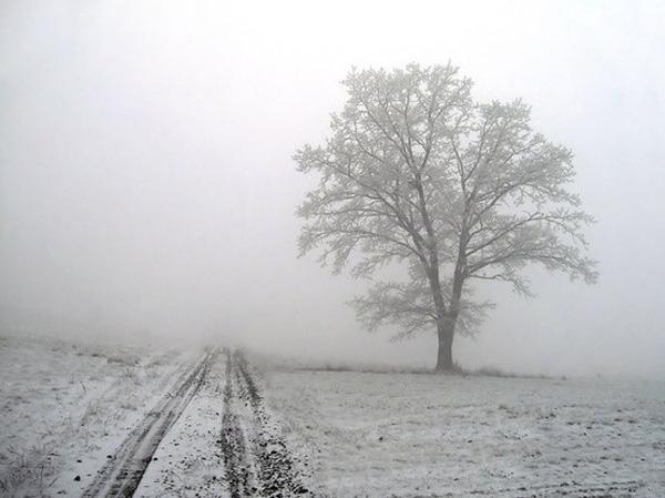 road-tree