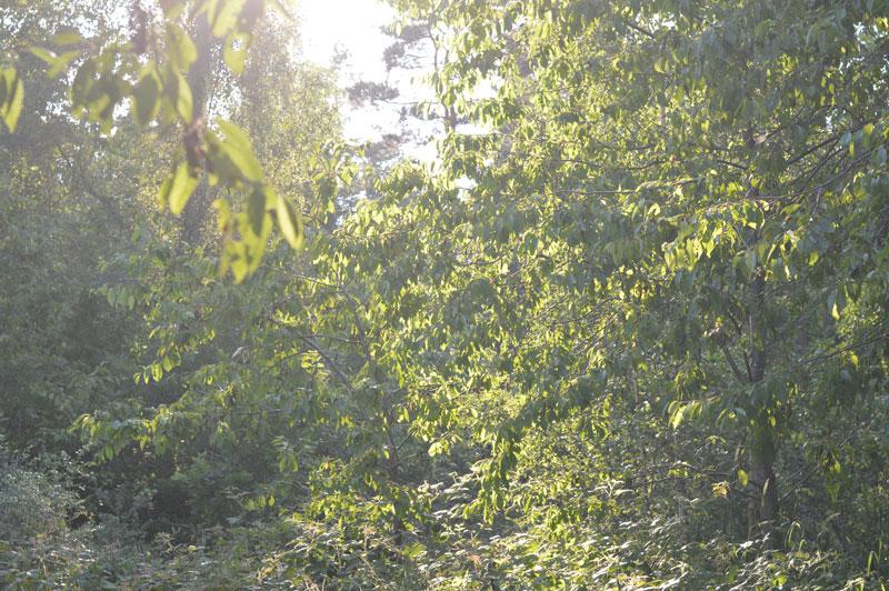 nature23